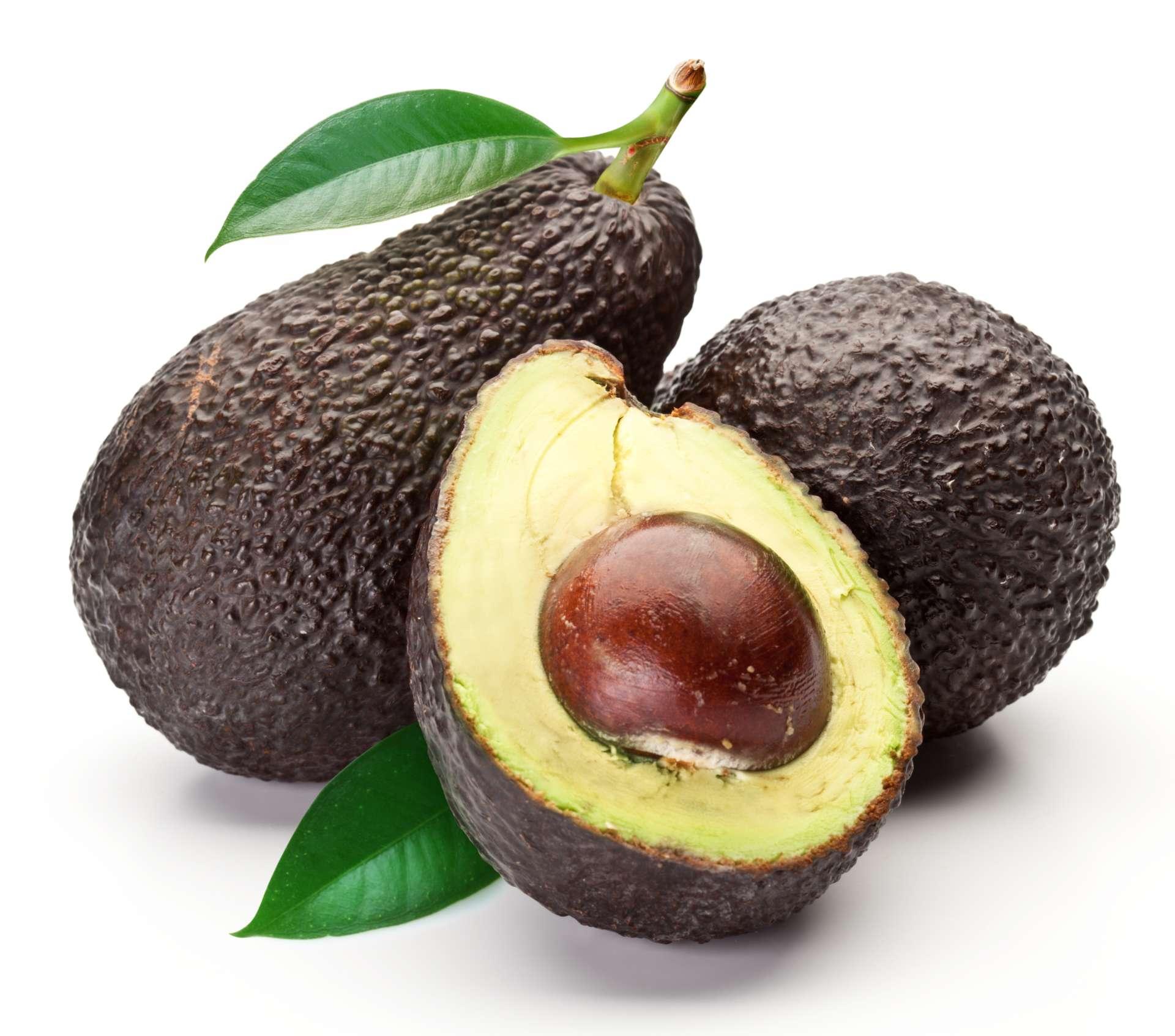 Avocado - Alles über die Avocado
