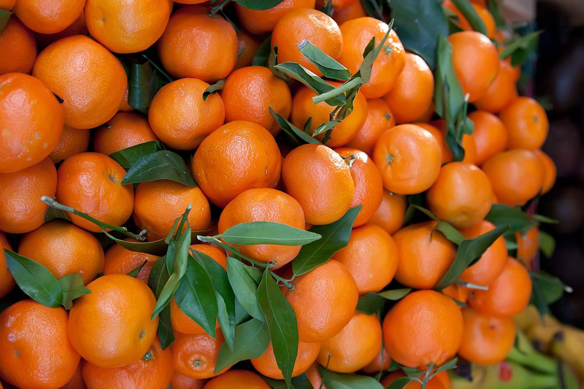 Clementine - Alles über die Clementine